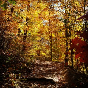 November - beautiful fall foliage on a hike in the Wissahickon